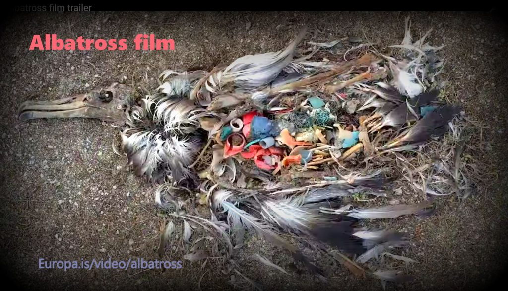 Albatross the film (trailer) or: birds full of plastic